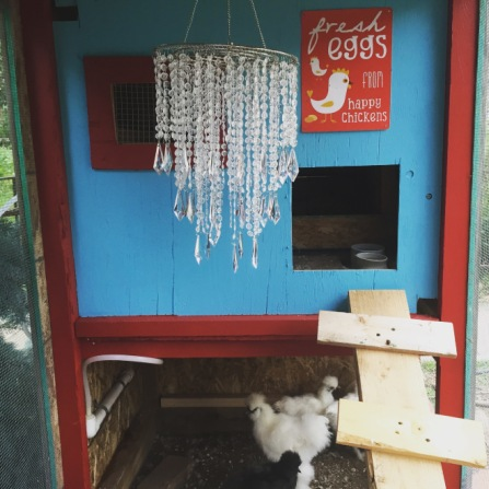 Is a chandelier too much for a coop? Never!